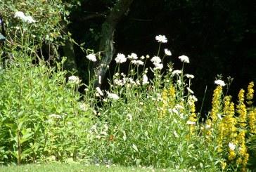Jak zadbać o własny ogród