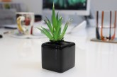 Aloes i jego zastosowanie w kosmetyce
